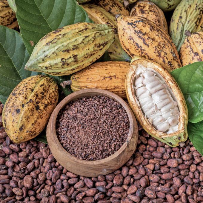 Kakaopflanzen und Kakaobohnen