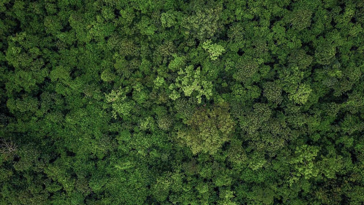 Ein grüner Wald von oben