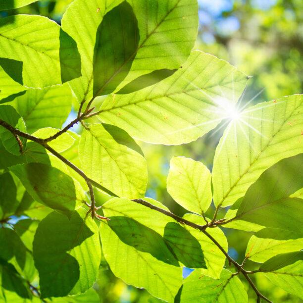 Klima und Naturschutz